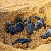Predavanje o želvah z Zelenortskih otokov
